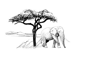 Elephant near a tree in africa. Hand