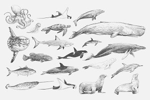 Illustration drawing style of marine