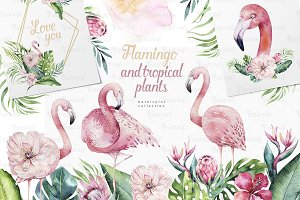 Tropical Flamingo collection