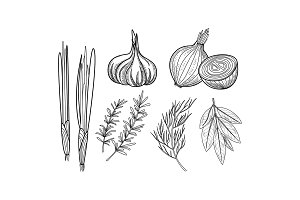 Vector set of culinary herbs and