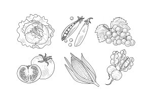 Vector set of fresh vegetables and