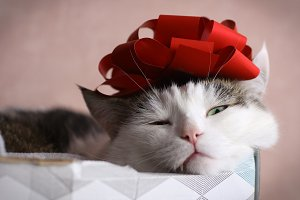 funny cat photo sleeping in gift box
