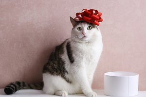 funny cat photo with gift box with r