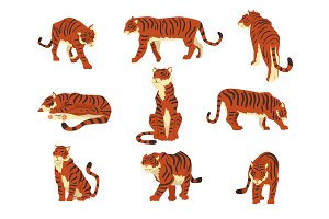 Powerful tiger in different actions