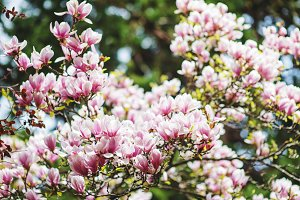 Beautiful spring background with