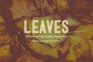 07 leaves photos | HQ V1