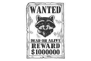 Poster with raccoon engraving vector