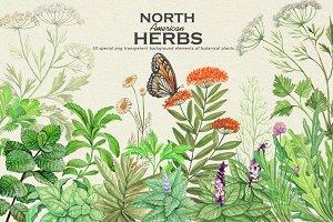 North American Herbs