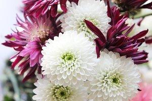 Flowers No. 2