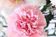 Flowers No. 3