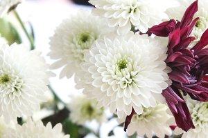 Flowers No. 4