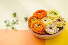 Flowers, Orange, Yellow, Sun Light  by  in Health