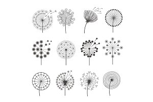 Dandelion icon. Botanical pictures