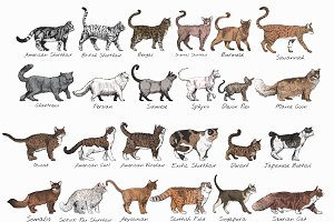 Drawing style of cat breeds