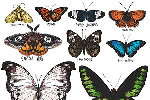 Set of butterfly illustration