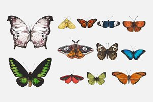 Butterfly collection illustration