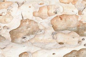 Background texture of tree bark.