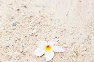 Flower fall on the sand