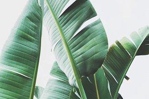 Tropical Leaves Portrait
