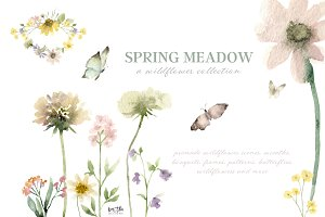 Spring Meadow Wildflower Collection
