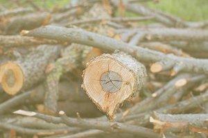 Logs in the sun