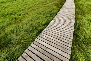 Sea of grass...