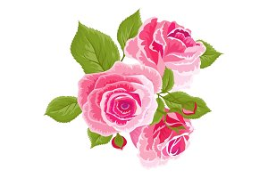 Pink roses and buds. Vintage flowers