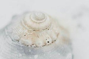 Sea Shell Top Macro