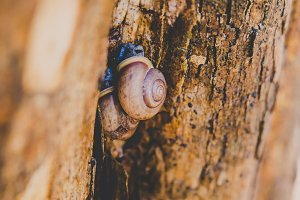 Snails in the Wood