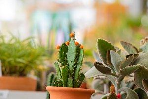 Decoration cactus in the exhibition