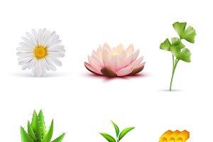 Organic cosmetic ingredients set