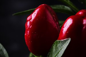 Hot red pepper on a bush with dew dr