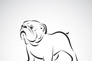 Vector of bulldog design.Pet.Animal.