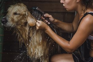 dog in the shower