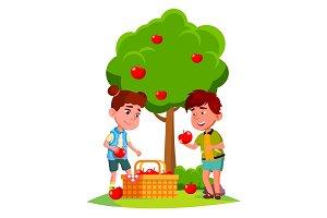 Kids Harvest Apples In Basket Near