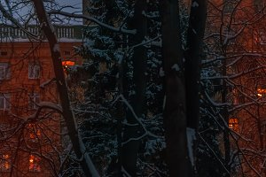 Windows in winter twilight