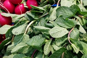 bunches of mint and radishes