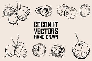 Coconut  Vector Hand Drawn