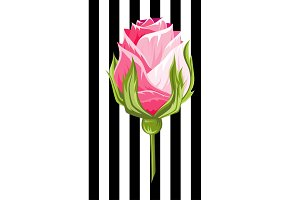 Pink rose bud illustration insolated