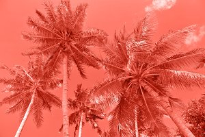 Palm trees Summer nature background