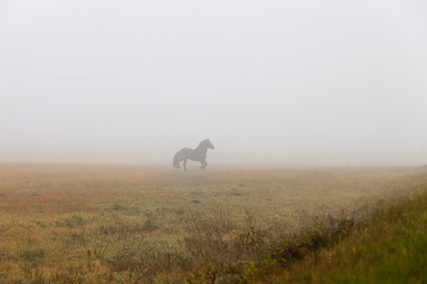 Animal Stock Photos: rsooll - black horse