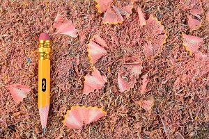 Pencil Stub on Shavings