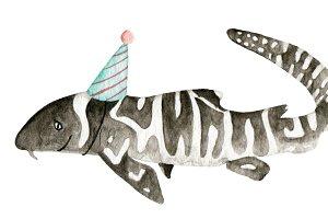 Party Shark: Zebra Shark