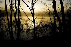 foggy swamp  with trees