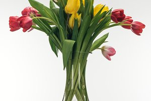 bouquet of tulips in glass vase on w
