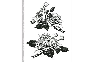 Hand sketched set of white roses