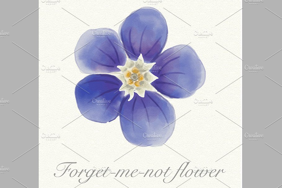 Blue watercolor forget-me-not flower