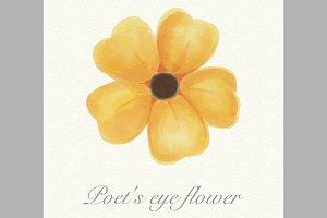 Yellow watercolor poet's eye flower
