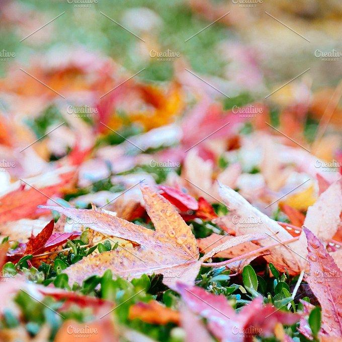 Autumn leaves.jpg - Nature