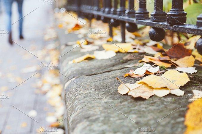 Fall in city.jpg - Nature